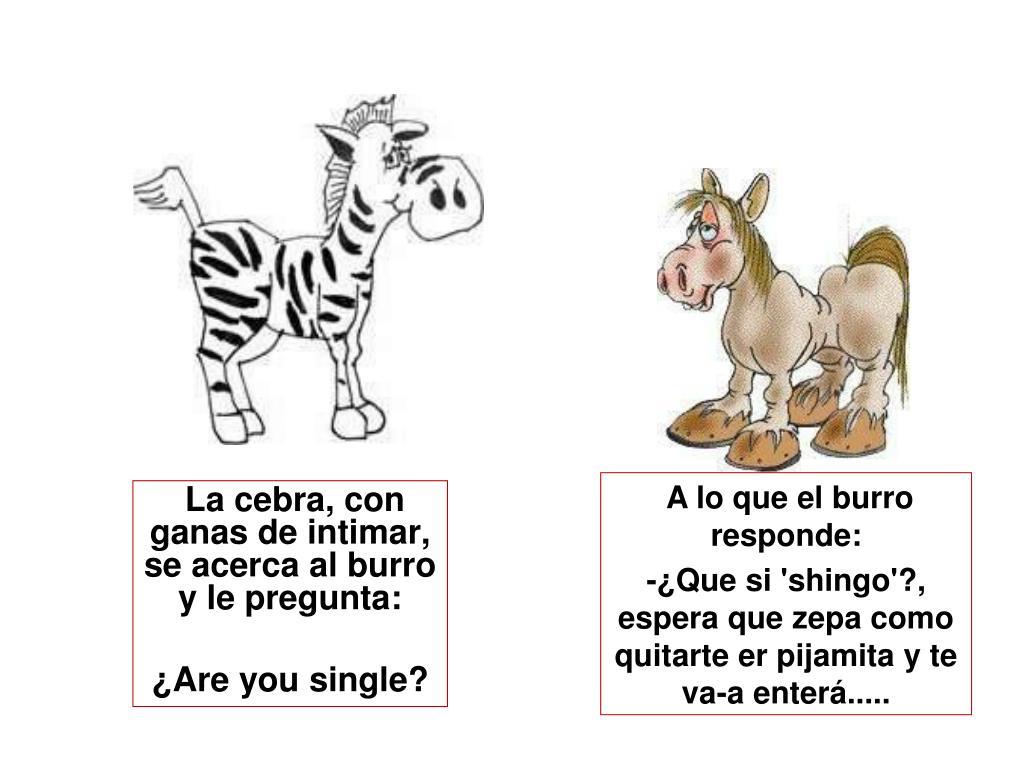 La cebra, con ganas de intimar, se acerca al burro y le pregunta: