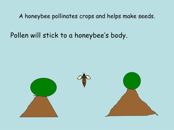 A honeybee pollinates crops and helps make seeds.