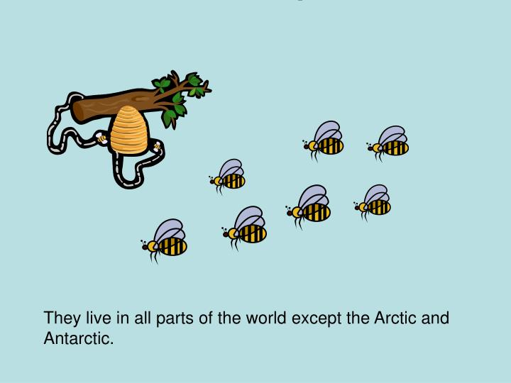 They live in all parts of the world except the Arctic and Antarctic.