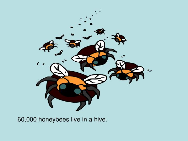 60,000 honeybees live in a hive.