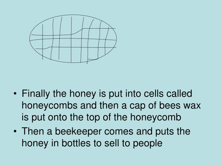 Finally the honey is put into cells called honeycombs and then a cap of bees wax is put onto the top of the honeycomb
