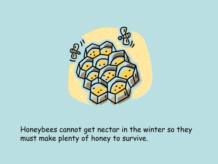 Honeybees cannot get nectar in the winter so they must make plenty of honey to survive.