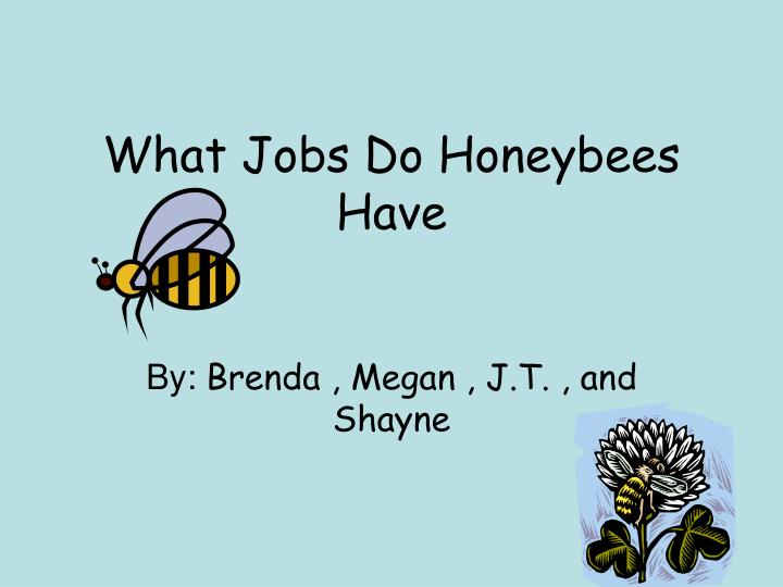 What Jobs Do Honeybees