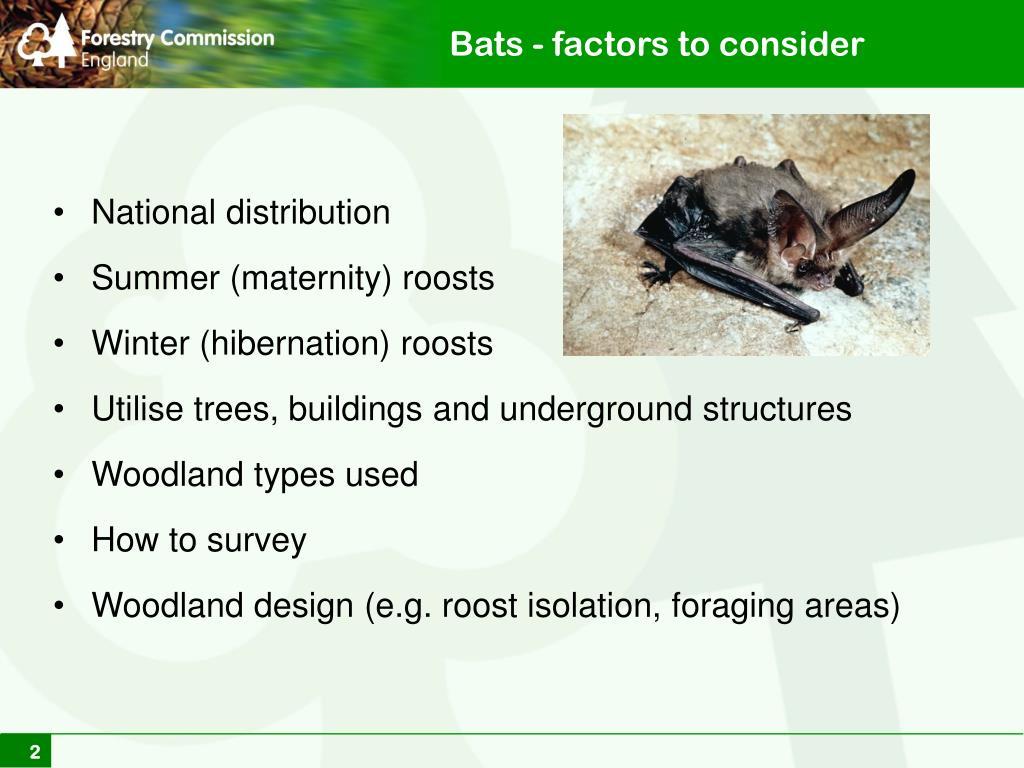 Bats - factors to consider