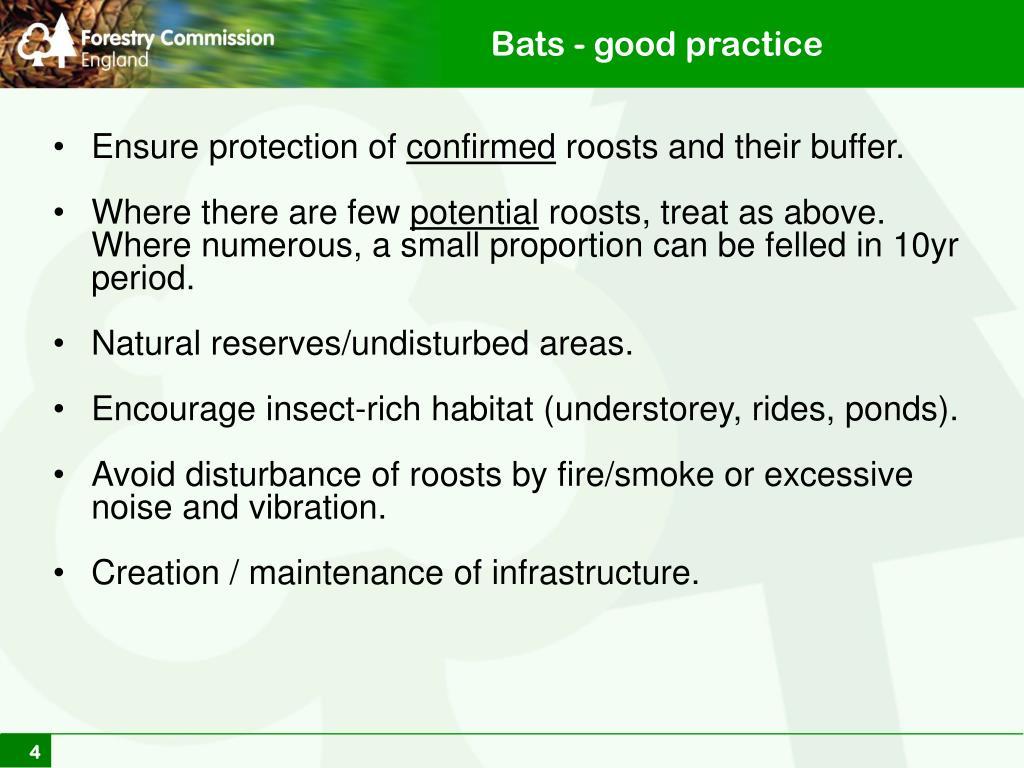 Bats - good practice
