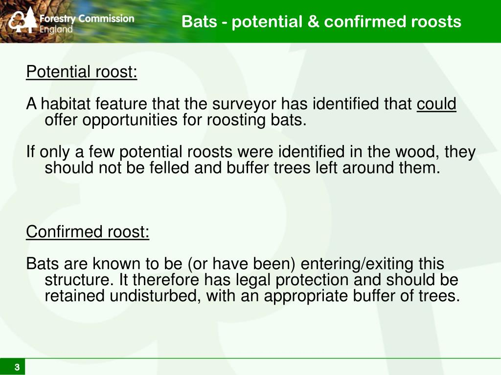 Bats - potential & confirmed roosts