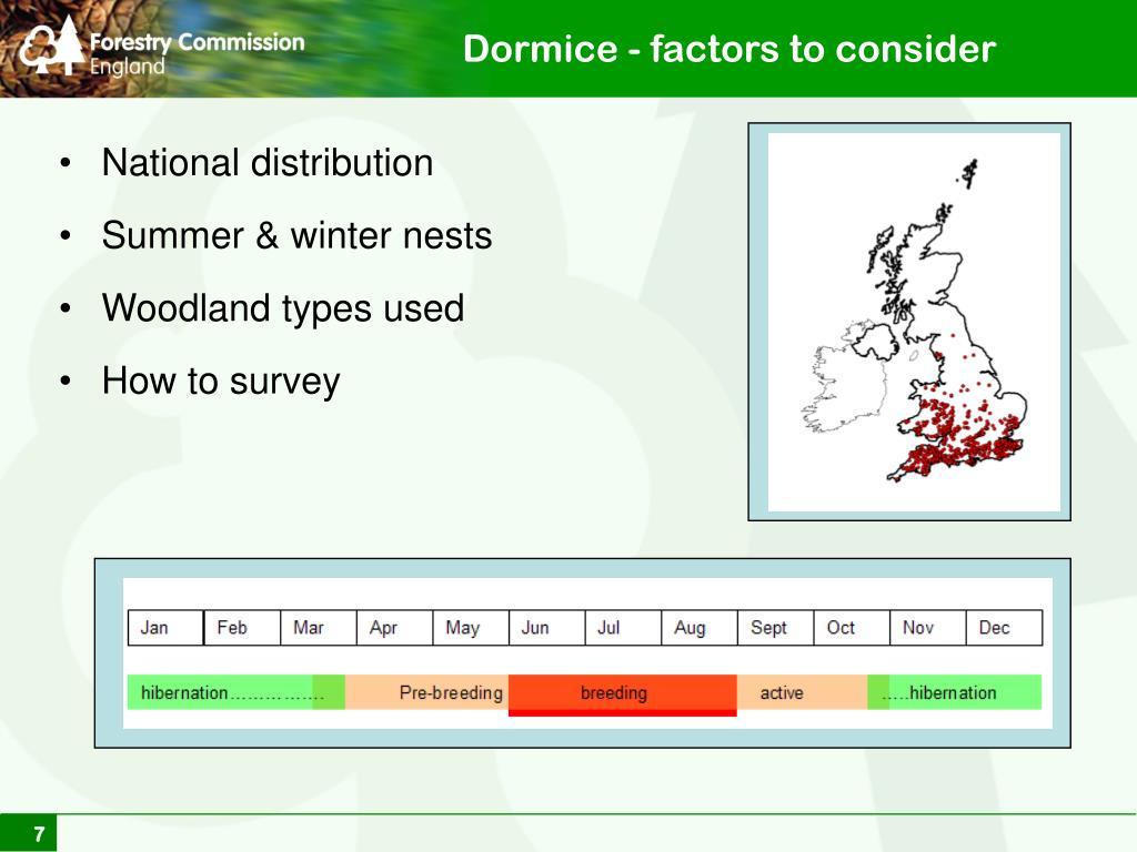 Dormice - factors to consider