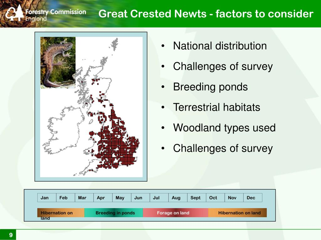 Great Crested Newts - factors to consider