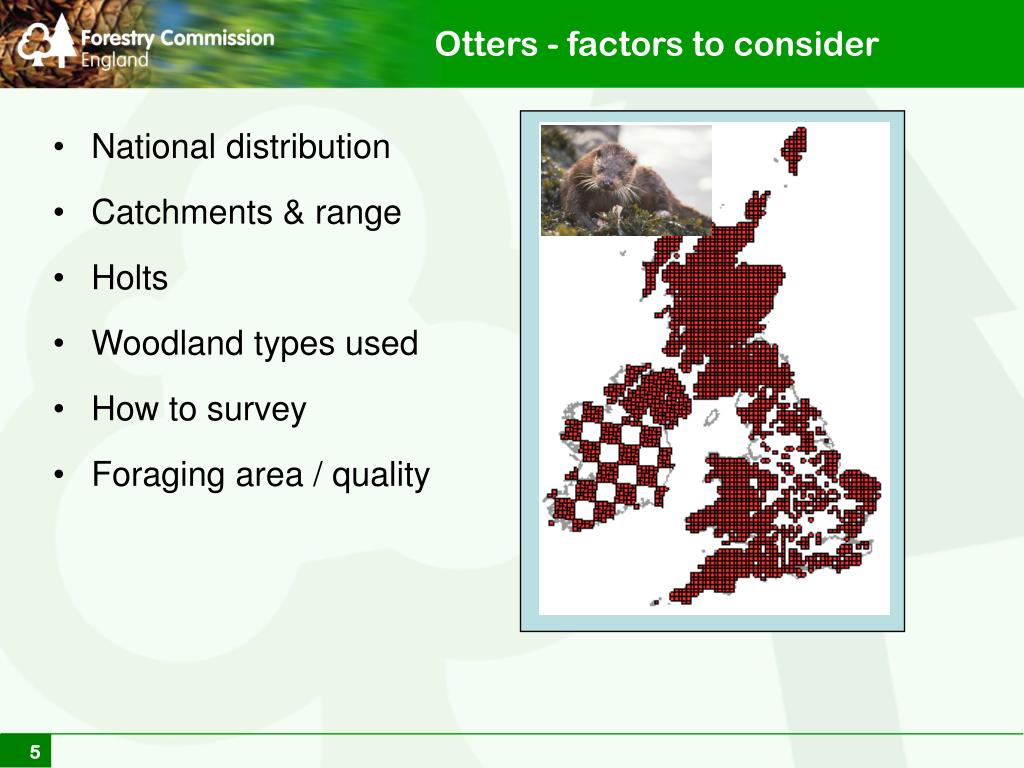Otters - factors to consider