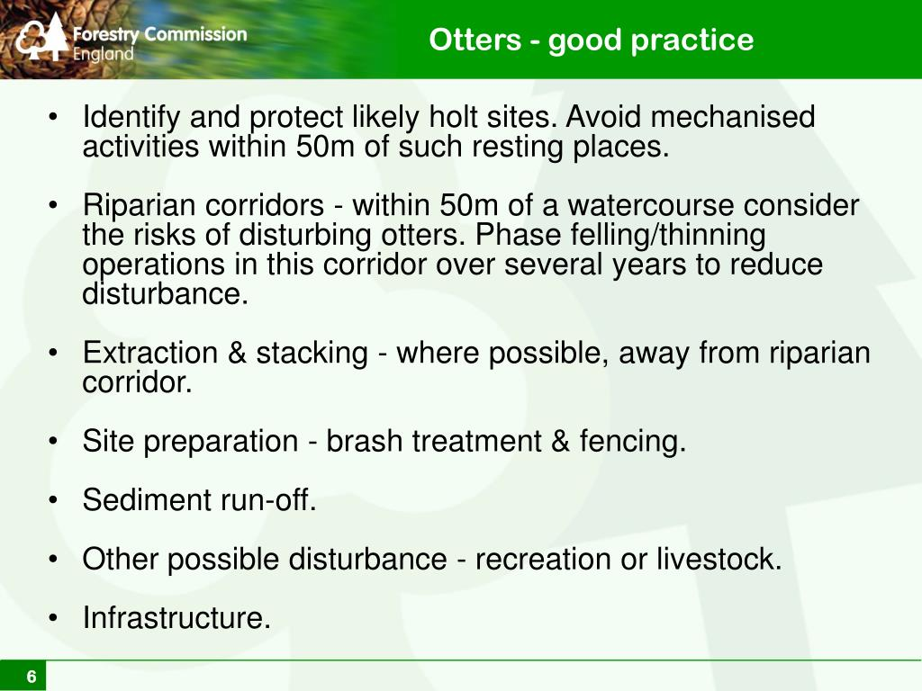 Otters - good practice