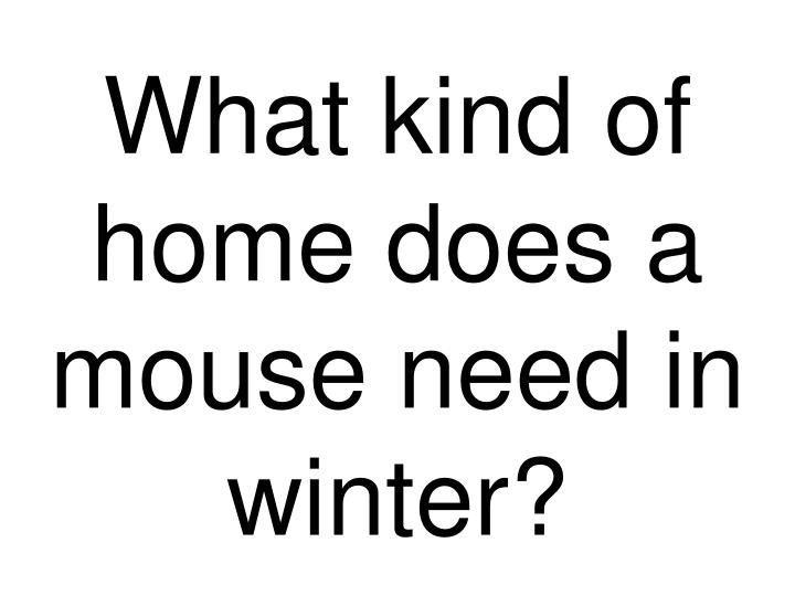 What kind of home does a mouse need in winter