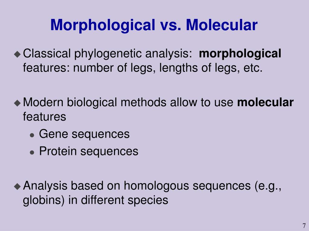 Morphological vs. Molecular