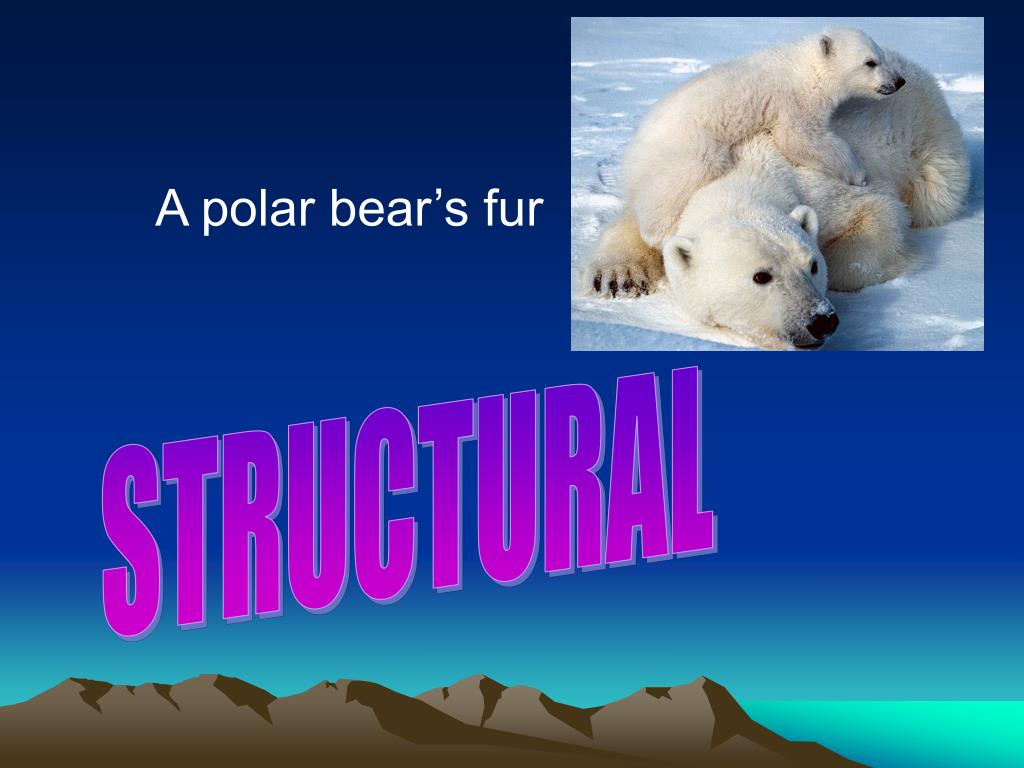 A polar bear's fur