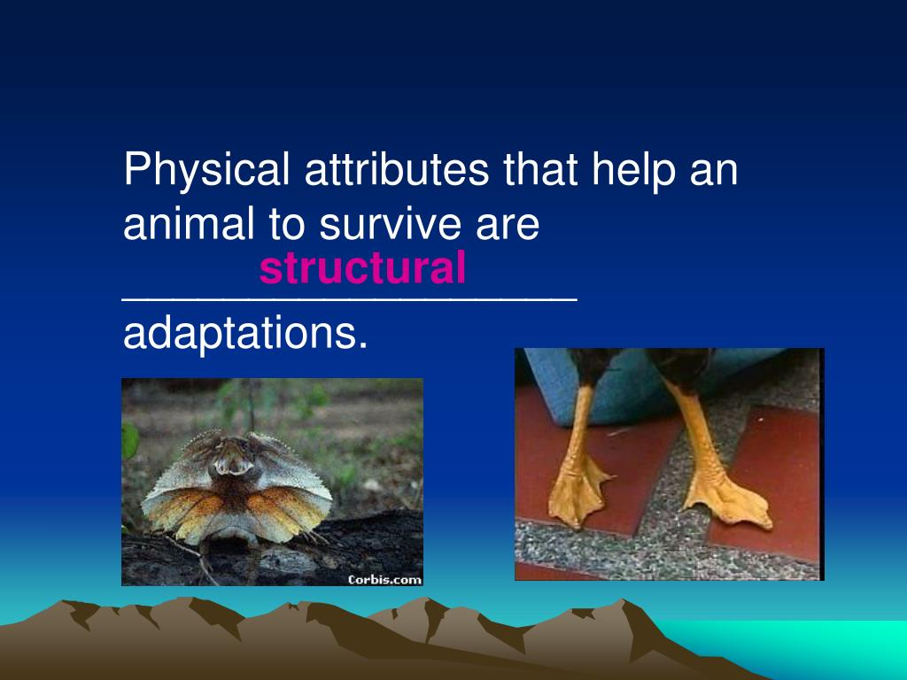 Physical attributes that help an animal to survive are __________________ adaptations.