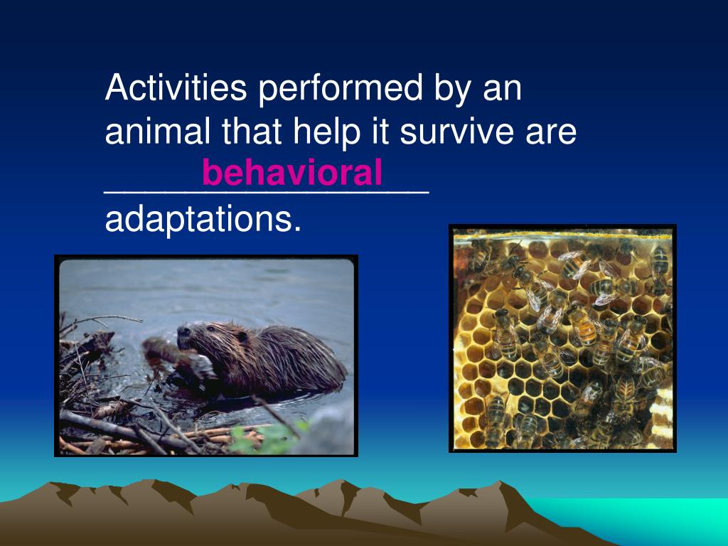 Activities performed by an animal that help it survive are ________________ adaptations.
