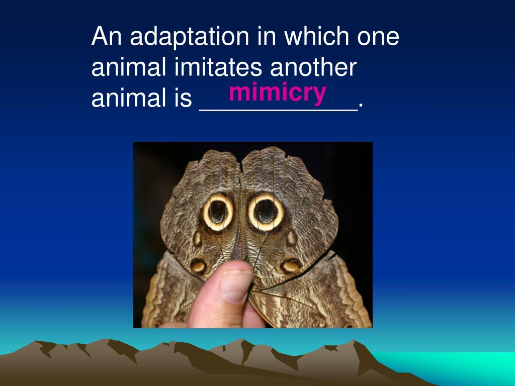 An adaptation in which one animal imitates another animal is ___________.