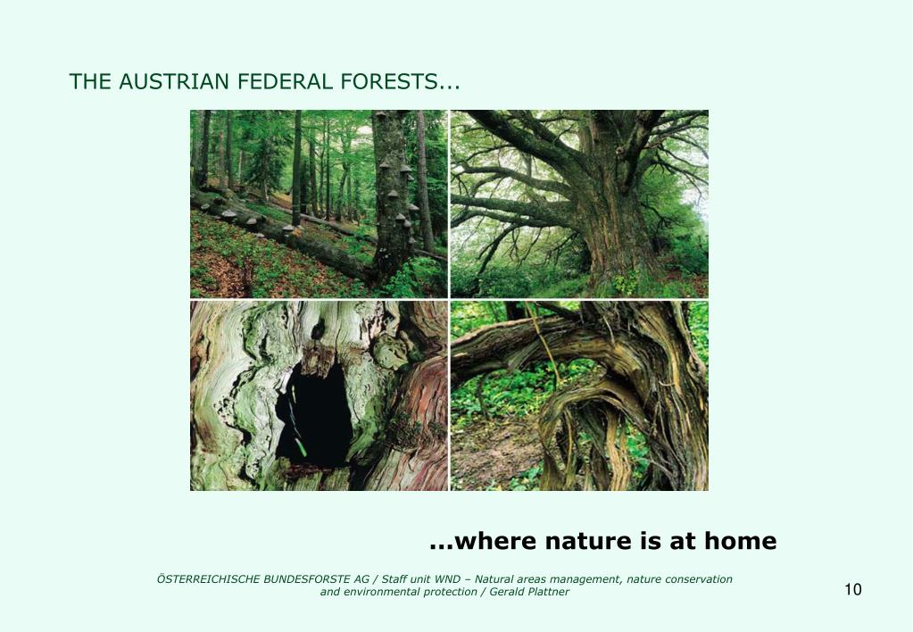 THE AUSTRIAN FEDERAL FORESTS...