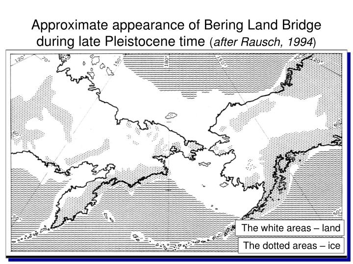 Approximate appearance of bering land bridge during late pleistocene time after rausch 1994