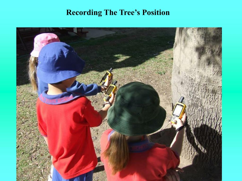 Recording The Tree's Position