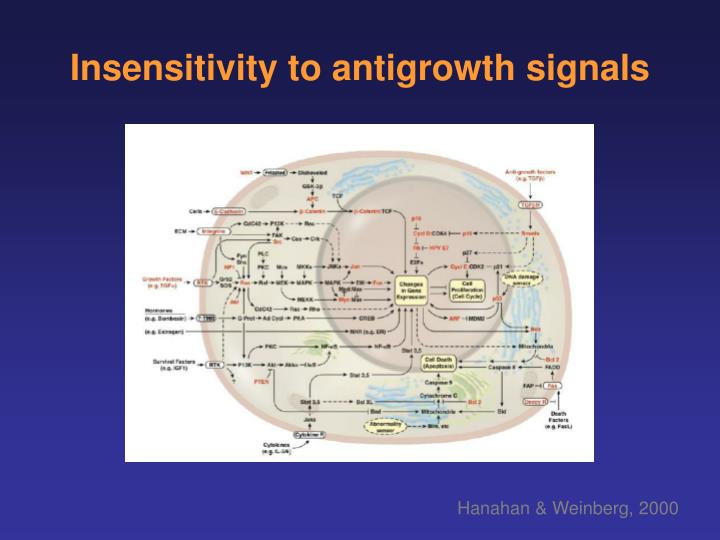 Insensitivity to antigrowth signals