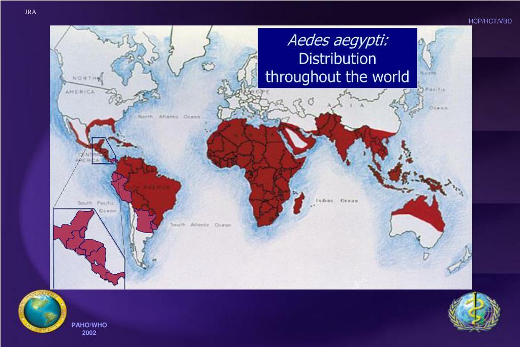 Aedes aegypti:
