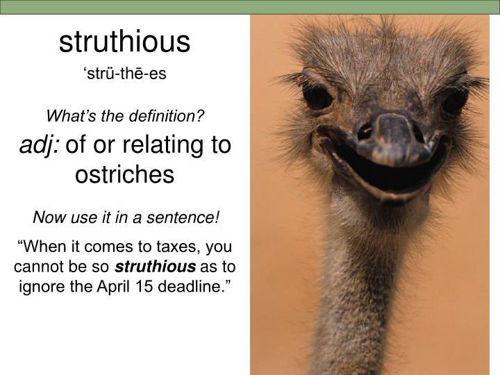 struthious