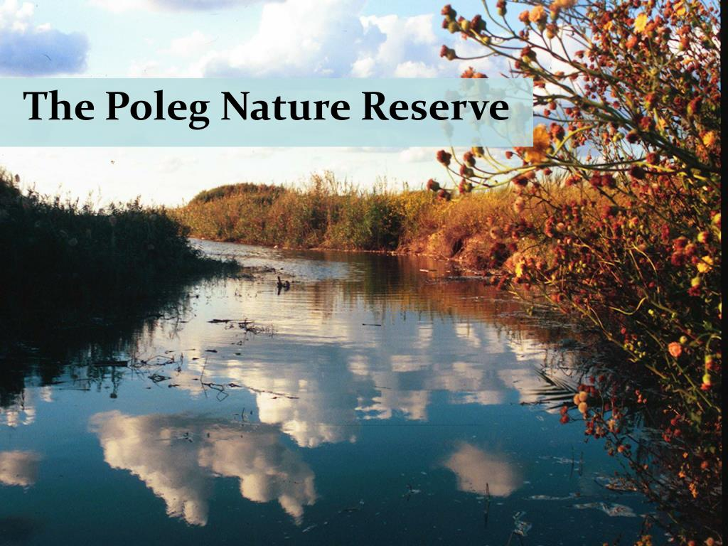 The Poleg Nature Reserve