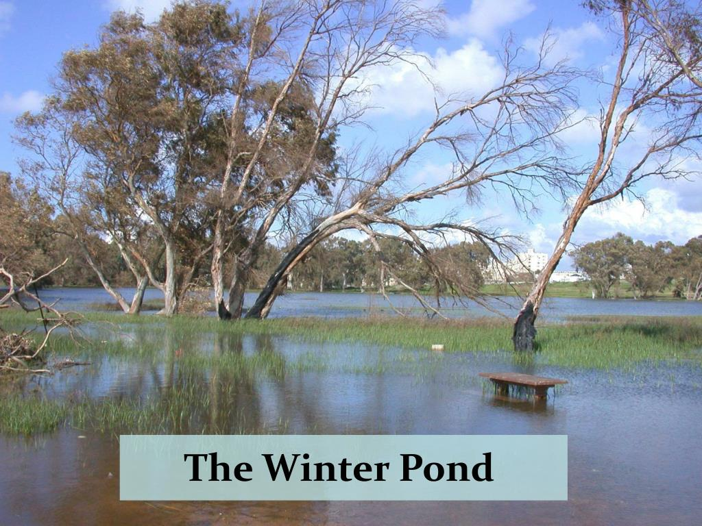 The Winter Pond