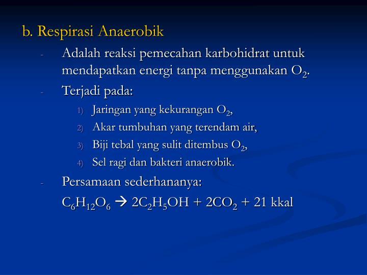 b. Respirasi Anaerobik