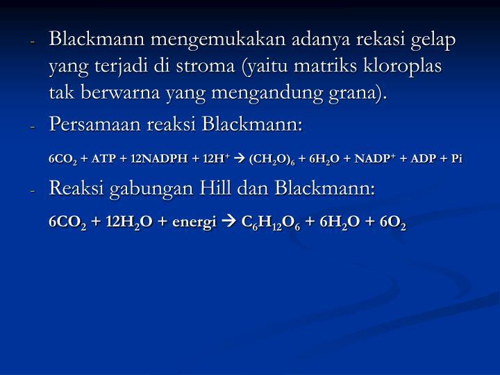 Blackmann mengemukakan adanya rekasi gelap yang terjadi di stroma (yaitu matriks kloroplas tak berwarna yang mengandung grana).