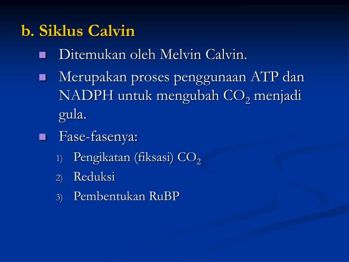 b. Siklus Calvin