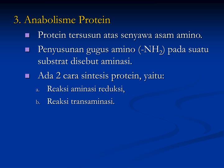 3. Anabolisme Protein