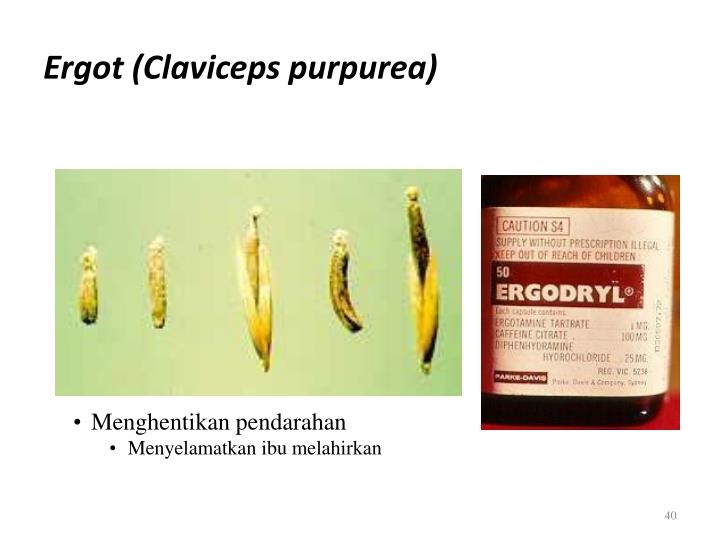 Ergot (Claviceps purpurea)