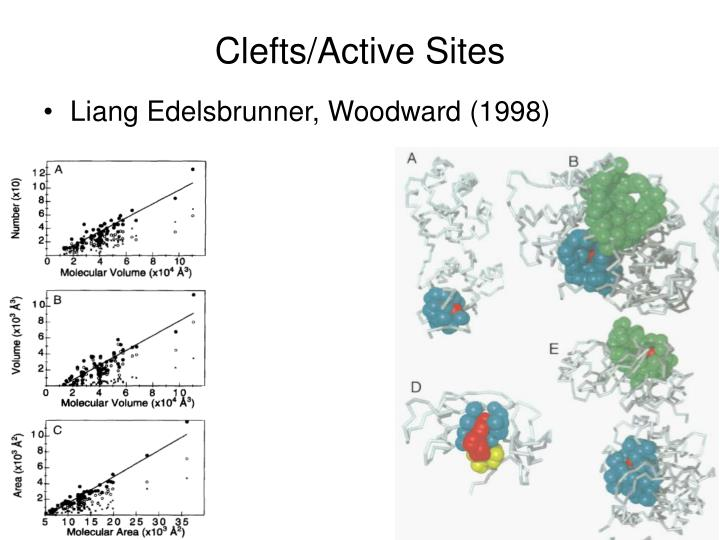 Clefts/Active Sites