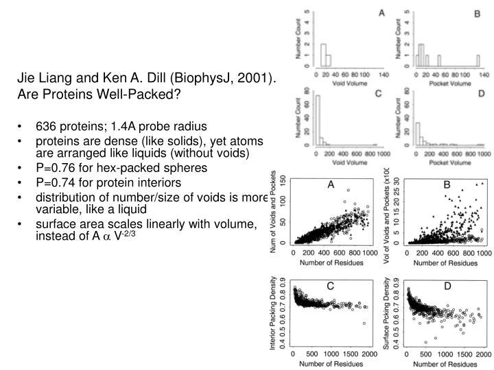 Jie Liang and Ken A. Dill (BiophysJ, 2001).