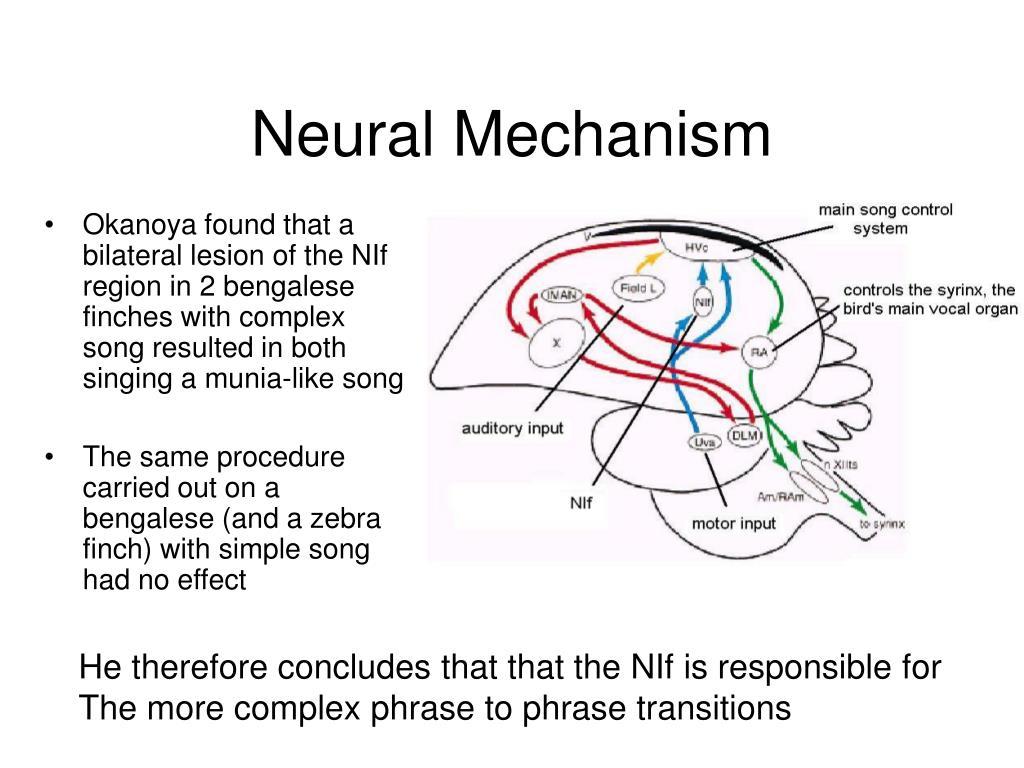Neural Mechanism