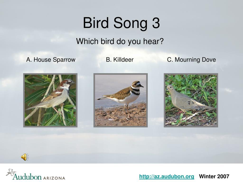 Bird Song 3