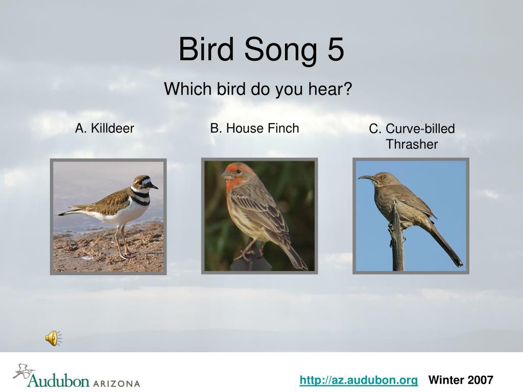 Bird Song 5