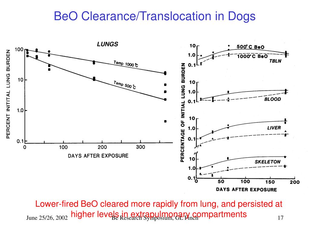 BeO Clearance/Translocation in Dogs