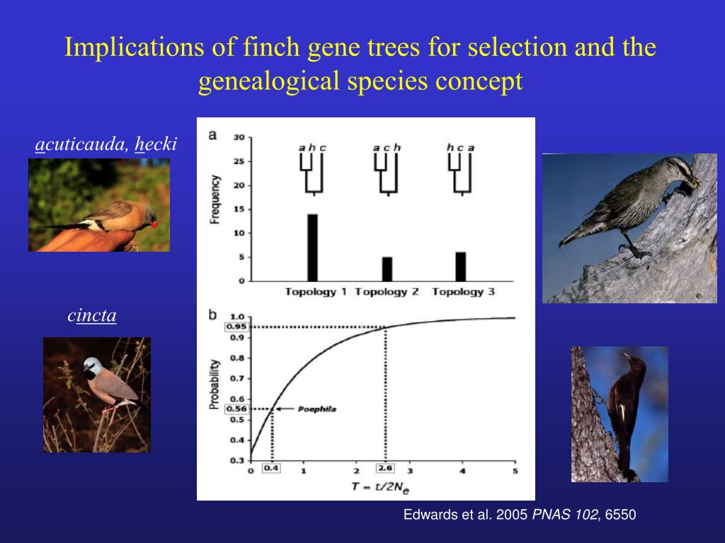 Implications of finch gene trees for selection and the