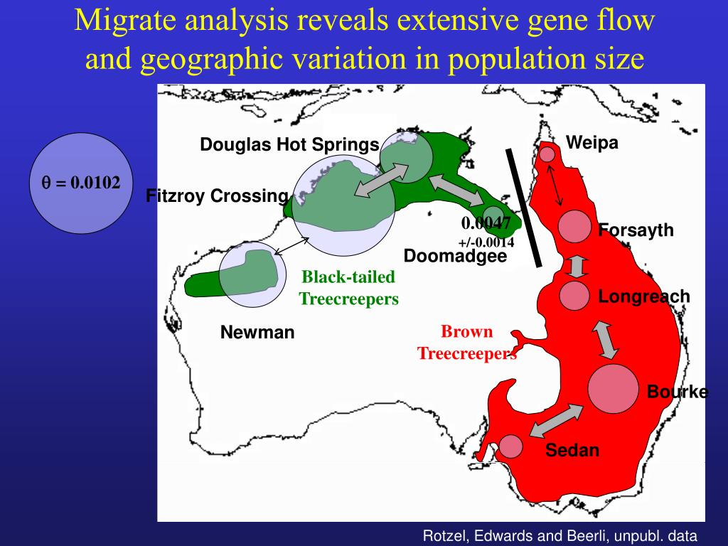 Migrate analysis reveals extensive gene flow and geographic variation in population size