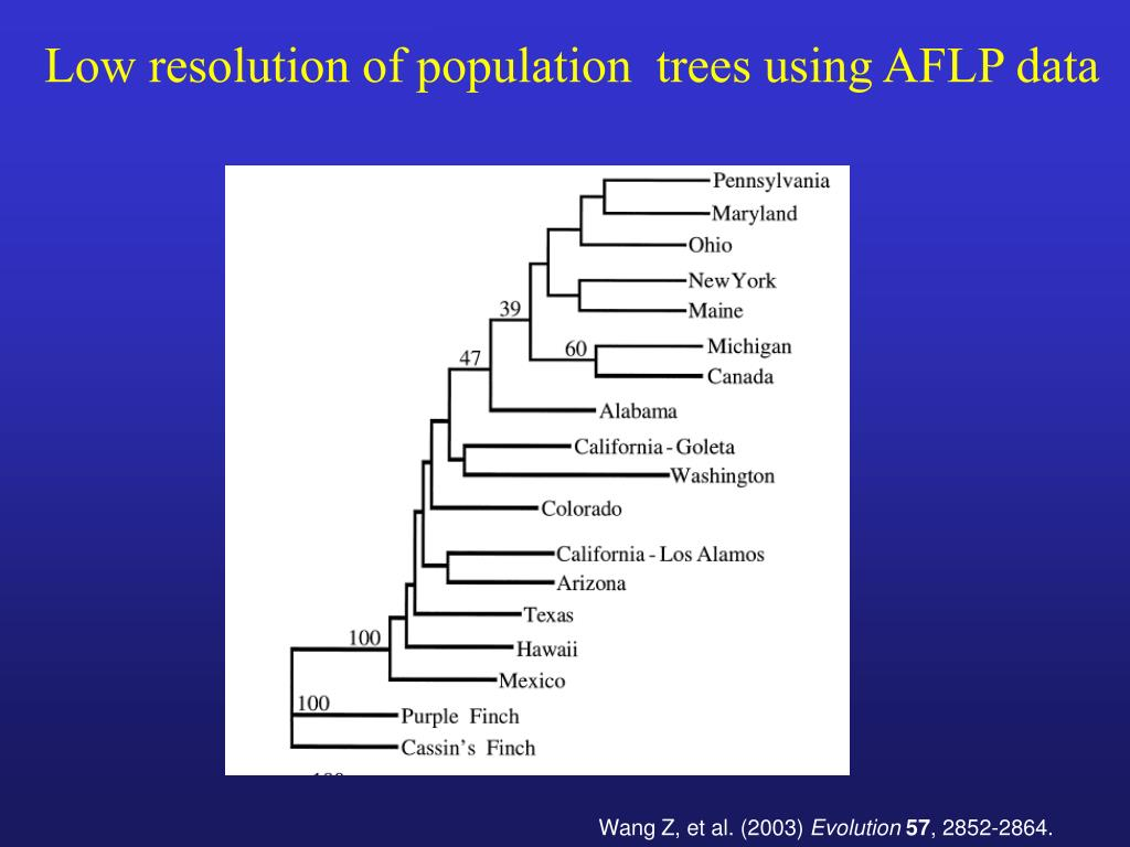 Low resolution of population  trees using AFLP data