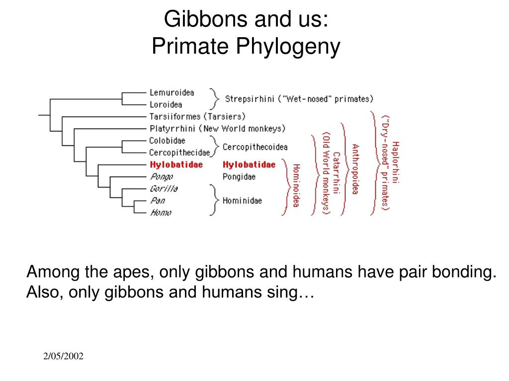 Gibbons and us: