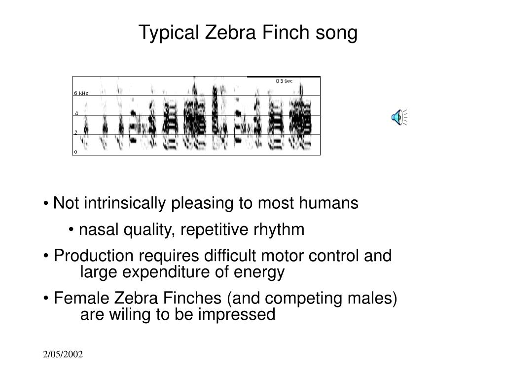 Typical Zebra Finch song