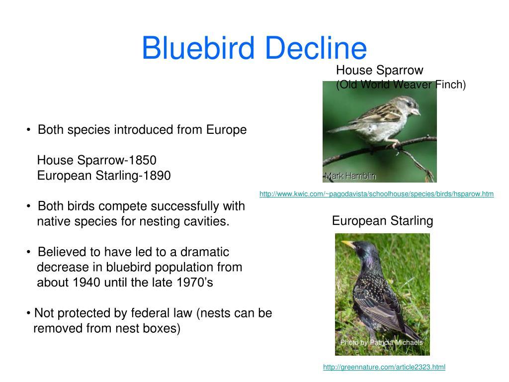 Bluebird Decline