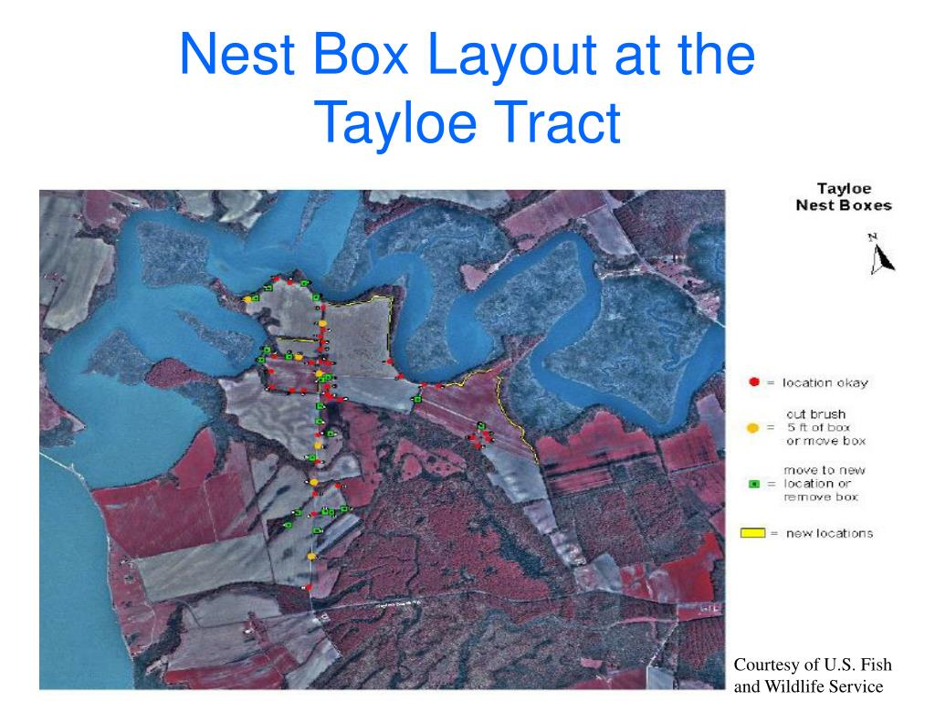 Nest Box Layout at the