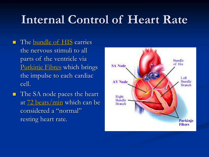 Internal Control of Heart Rate