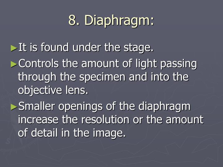 8. Diaphragm: