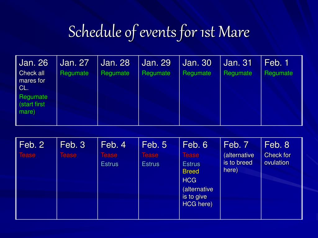 Schedule of events for 1st Mare
