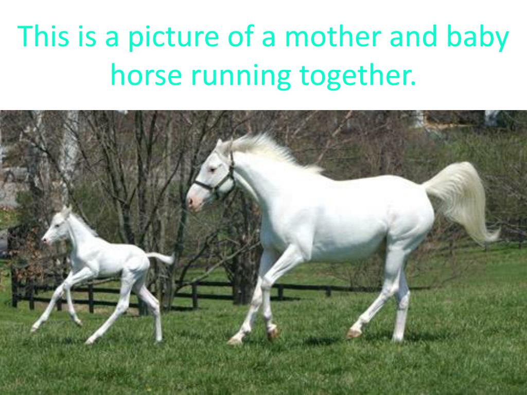 This is a picture of a mother and baby horse running together.